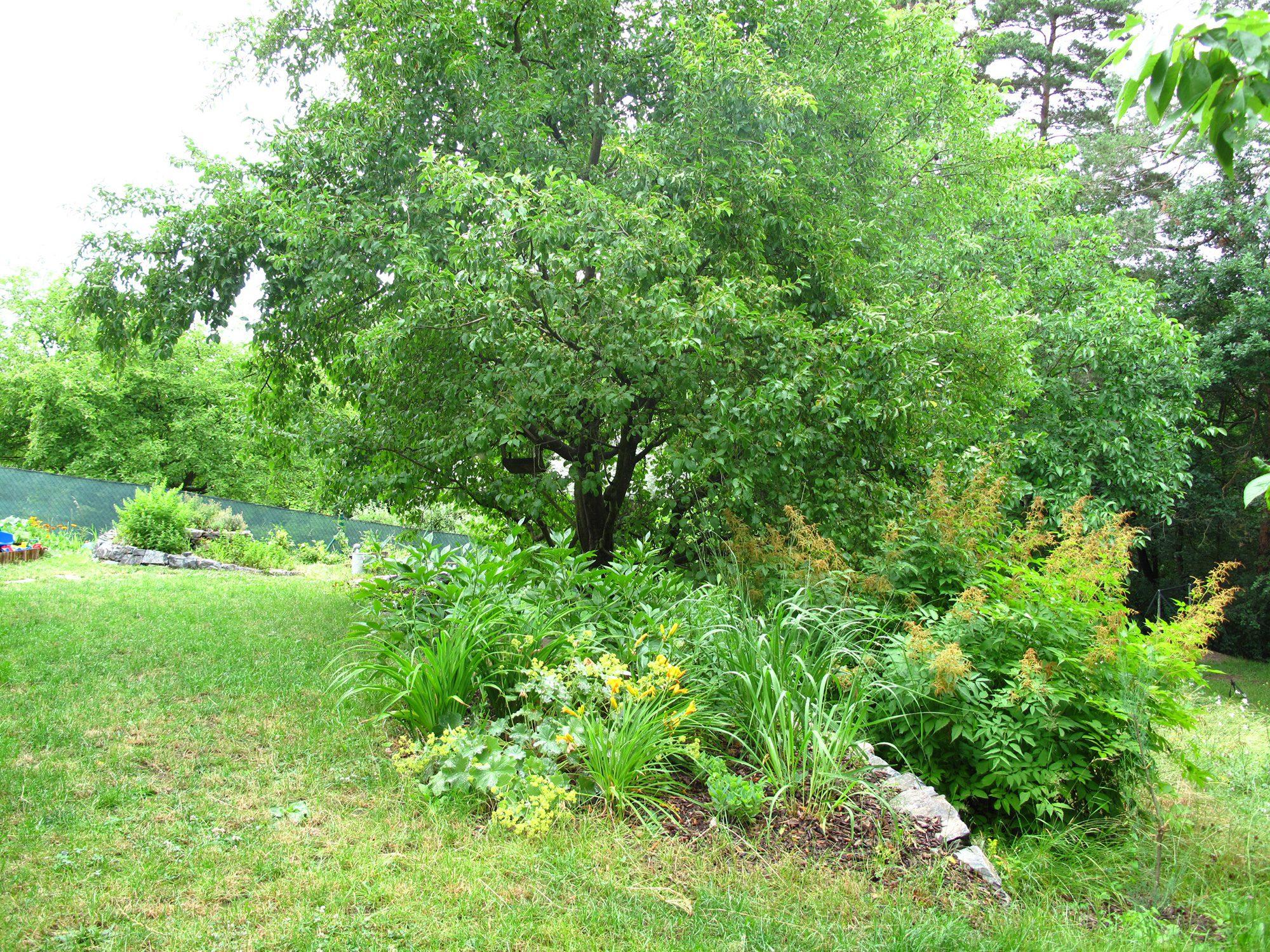 Starostlivosť o stromy